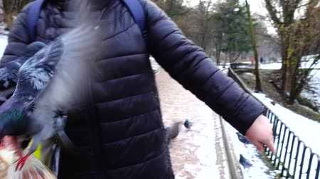 holubice : Feeding pigeons from your hands in the winter park.