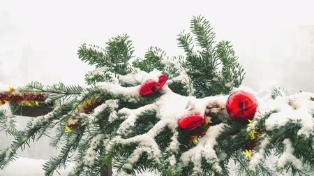 foresta conifere : Branches of Christmas tree decorated with toys under snow.