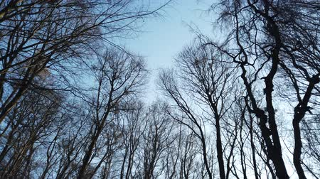 parasitic : Branches of trees against the background of the sky. Stock Footage