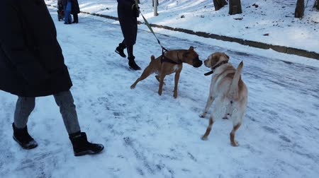 kutyák : LVIV, UKRAINE - FEBRUARY 8, 2020: Dog walk out in winter park.