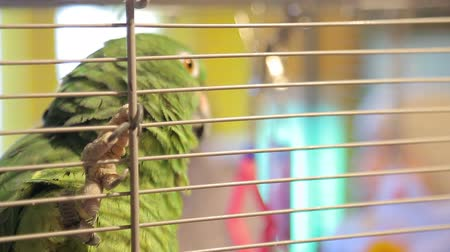 благотворительность : Animal shelter, parrot in a cage during the transfer of cash proceeds from the charity fair