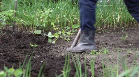 ásta : Man digging shovel in the garden, he is wearing dirty rubber boots Stock mozgókép