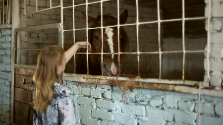 caresses : The girl in the barn with the horses, she caresses and petting the horses