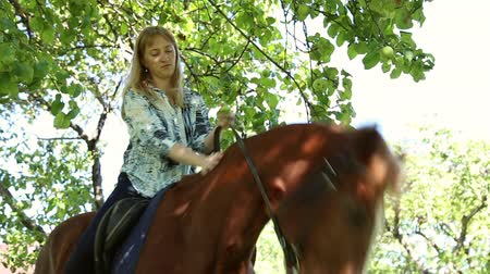 horse riding : The girl riding a horse in an apple orchard, a horse eating apples, the girl caresses and petting the horse Stock Footage
