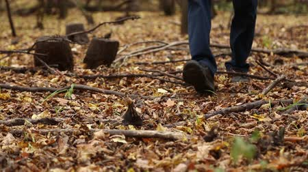 manges : A man walks in autumn forest, fallen yellow leaves lie on the ground, close-up of walking feet