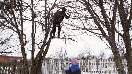 climbed : Man saws off the apple tree branch with a hacksaw, he climbed on ladders to the tree, the woman holds the ladder