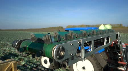 trator : Tractor working to harvest cabbage