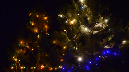 çelenk : Coniferous firs decorated with luminous garlands shake in the wind outside on a dark Christmas night.