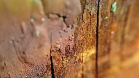 plankenvloer : Vintage wood background with peeling paint