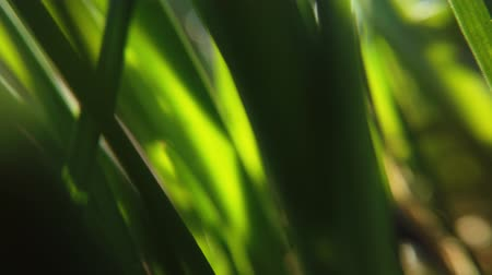 harmatcsepp : Fresh grass close up on sun rays