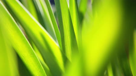 easily : Fresh grass close up on sun rays