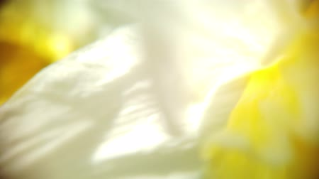 Daffodils bloom in spring Stok Video