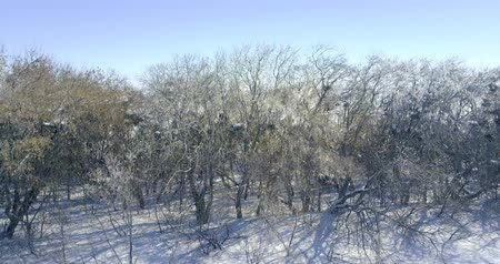canon : Winter landscape at aerial view Stock Footage