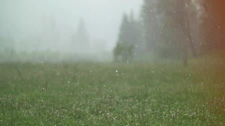 hail : shower of hail in altay mountains in july