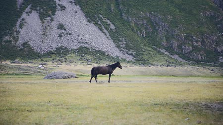 foothills : Walking Horse. The horse moves slowly against the background in Altay mountains