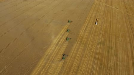 Wheat harvest. Combines work in the field.