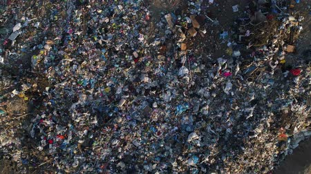 bad ecology : Birds fly over landfills. Pollution of the environment, pile of garbage.