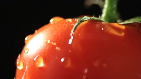 rajčata : Tomato rotating with fresh water drops. Find similar clips in our portfolio.