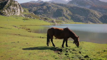 Horse grazing in the mountains next to a lake on a sunny day