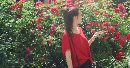 ブッシュ : Young smart attractive beatiful girl in red blouse rejoicing of message in her smartphone, bush with roses urban background 動画素材