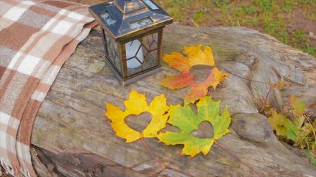 hickory : Maple Leaves Near The Lamp on a Fallen Tree
