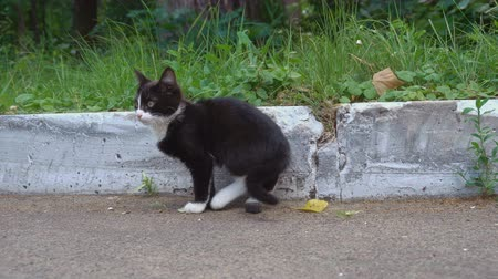 бдительный : Small stray cat look around Стоковые видеозаписи