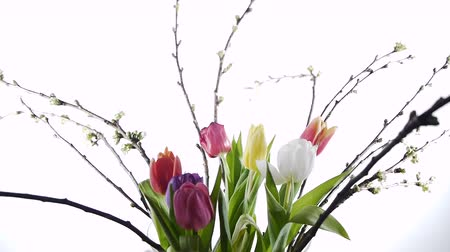 flower : some coloured tulips in a vase with turning