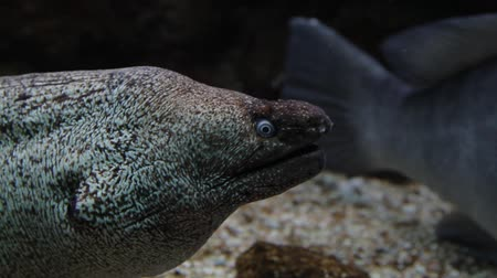 miscellaneous : Muray eel underwater shot