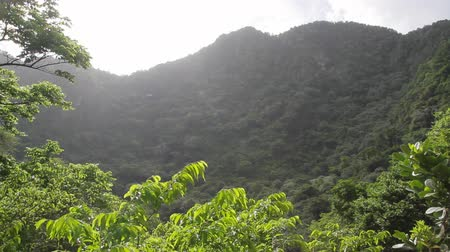eustatius : Tropical forest in a volcano crater at Quill National Park Sint Eustatius Caribbean