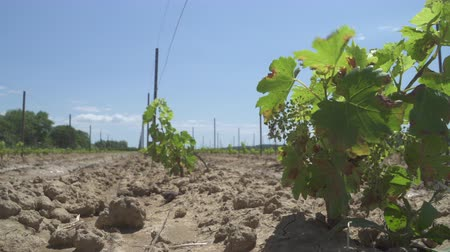 parreira : Planting a vineyard in Southern France Languedoc region
