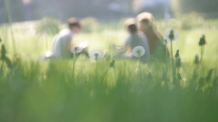 луг : Group of people on meadow among dandelions 1