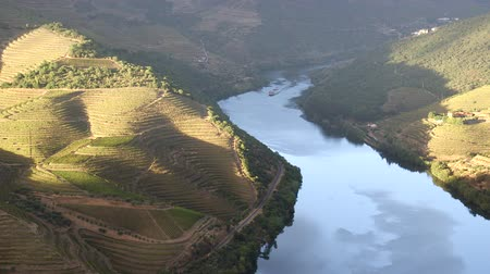 bebida alcoólica : Douro valley vineyards Stock Footage