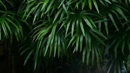 listki : Bright juicy exotic tropical greens in the jungle forest equatorial climate