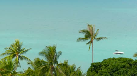 el değmemiş : The tropical coast with exotic coconut green palm trees with azure sea water Stok Video