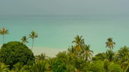 malásia : Paradise island exotic beach, tropical plants before rain swaing in the wind Vídeos