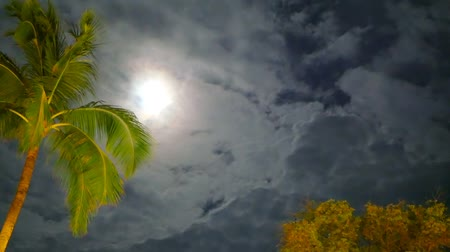 palmtree : A golden green coconun palm trees swinging branches in the wind Stock Footage