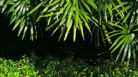 clima tropical : Bright juicy exotic tropical greens in the jungle forest equatorial climate