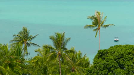 нетронутый : The tropical coast with exotic coconut green palm trees with azure sea water Стоковые видеозаписи