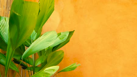 arte : Green juicy tropical foliage. Floral spring or summer background.