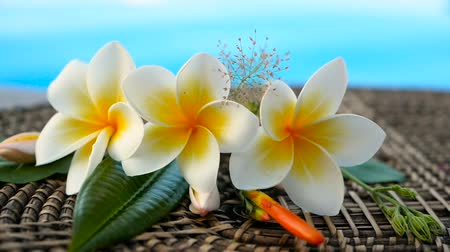 vonný : Fresh white frangipani plumeria tropical exotic flowers over blue swimming pool water, background spa still life, travel and tourism, concept of a summer paradise vacation and aroma relaxation. Dostupné videozáznamy