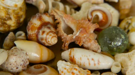 разница : Close up lots of different mixed colorful seashells as background. Various corals, marine mollusk and scallop shells. Sea vacation travel and beach holiday tourism concept. Стоковые видеозаписи