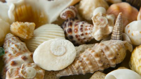 scallop : Close up lots of different mixed colorful seashells as background. Various corals, marine mollusk and scallop shells. Sea vacation travel and beach holiday tourism concept. Stock Footage