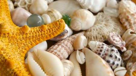 starfish : Large Yellow Seastar and close up lots of different mixed colorful seashells as background. Various corals, marine mollusk and scallop shells. Sea vacation travel and beach holiday tourism concept.