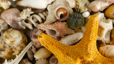 scallop : Large Yellow Seastar and close up lots of different mixed colorful seashells as background. Various corals, marine mollusk and scallop shells. Sea vacation travel and beach holiday tourism concept.