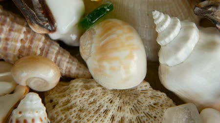 etoile de mer : Close up lots of different mixed colorful seashells as background. Various corals, marine mollusk and scallop shells. Sea vacation travel and beach holiday tourism concept. Vidéos Libres De Droits