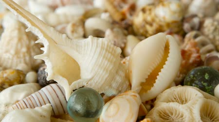 caracol : Close up lots of different mixed colorful seashells as background. Various corals, marine mollusk and scallop shells. Sea vacation travel and beach holiday tourism concept. Stock Footage