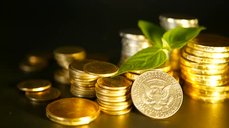 cent : Golden coins and green leaf of sprout on black background. Success of finance business, mortgage and real estate investment, retirement, saving plan for loan, deposit, wealth, banking concepts.