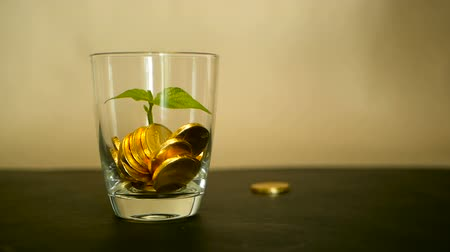 penny : Management efficiency. Golden coins in glass and green leaf of sprout on black background. Success of finance business, investment, financial ideas. Rotating, twisting, swirling, spinning penny. Stock Footage