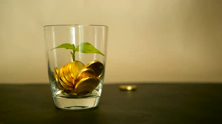 účty : Management efficiency. Golden coins in glass and green leaf of sprout on black background. Success of finance business, investment, financial ideas. Rotating, twisting, swirling, spinning penny. Dostupné videozáznamy