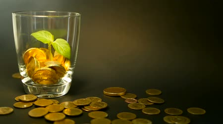 metaphors : Management efficiency. Golden coins in glass and green leaf of sprout on black background. Success of finance business, investment, financial ideas. Rotating, twisting, swirling, spinning penny. Stock Footage